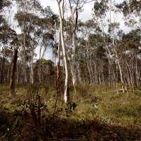 Lithgow bushland
