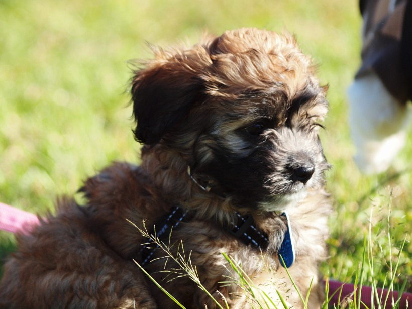 Cute pup