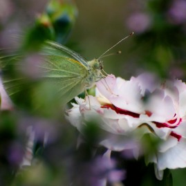 Mt Tomah bugs