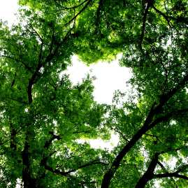 Bathurst trees
