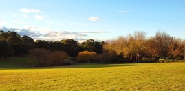 Fagan Park Landscape