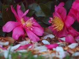 Flowers Fagan Park
