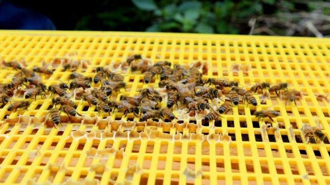 The Urban Beehive