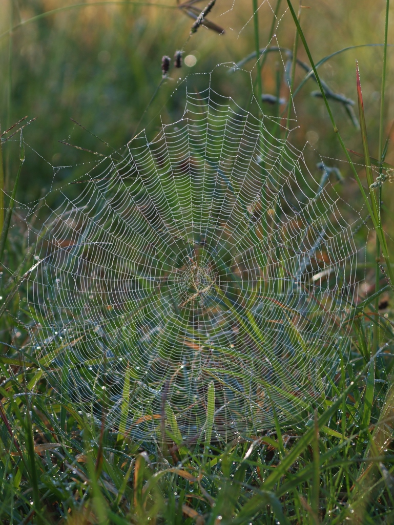 Spiderweb at sunrise
