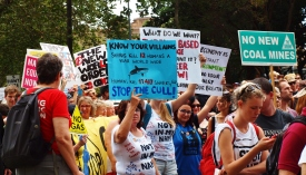 Stop the shark cull #marchinmarch