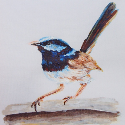 Superb Blue Wren Painting Upper North Shore Sydney Commissions