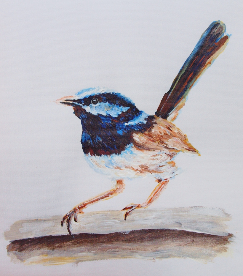Superb Blue Wren painting