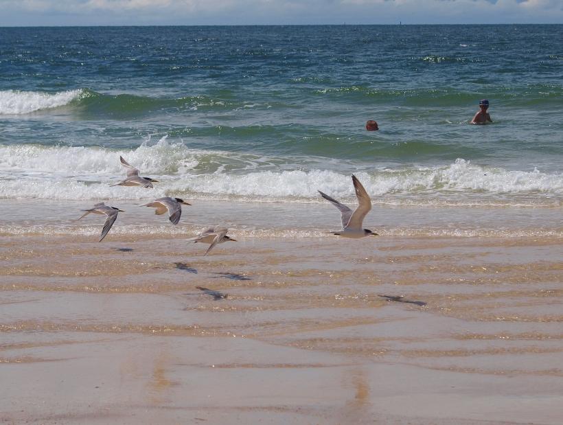 Seagulls at Woorim Beach, Queensland