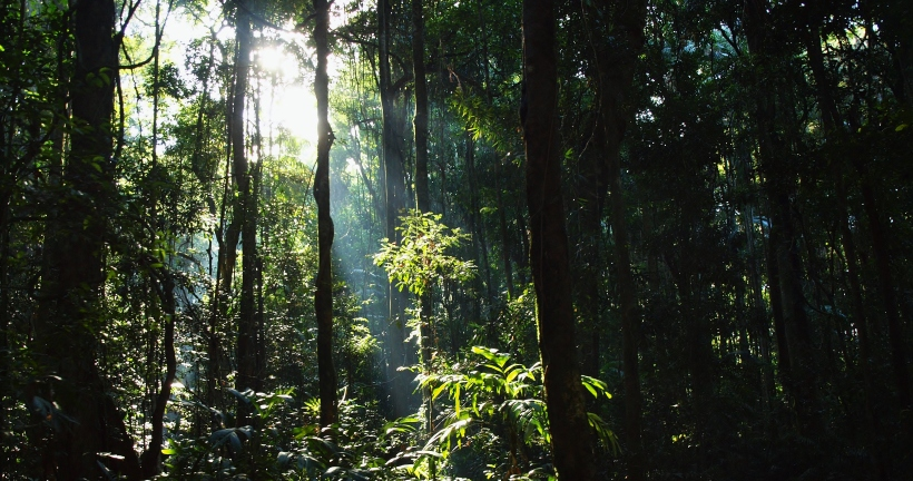 Mary Caincross Nature Reserve, Maleny Queensland
