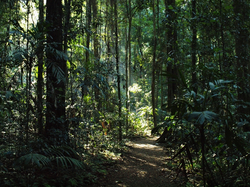 Mary Cairncross Reserve, Queensland