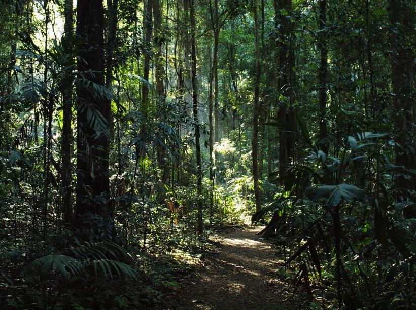 Mary Cairncross Reserve, Queensland