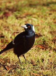 Julie Green Nature Photography