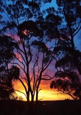 Julie Green Photography Australia