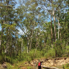 Perry's Lookdown to Blue Gum Forest