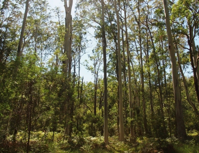 Blue Gum Forest Photography Blue Mountains