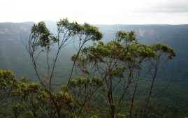 Perry's Lookdown hike Blue Mountains