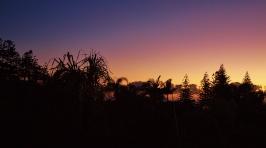 Sunrise Coffs Harbour