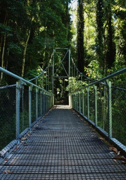 Dorrigo Rainforest Reserve