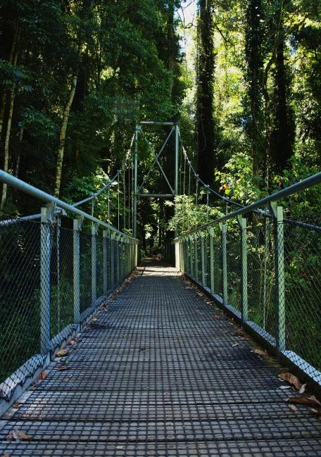 Dorrigo Rainforest Reserve