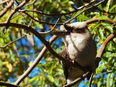 Hornsby Wildlife Nature Photography