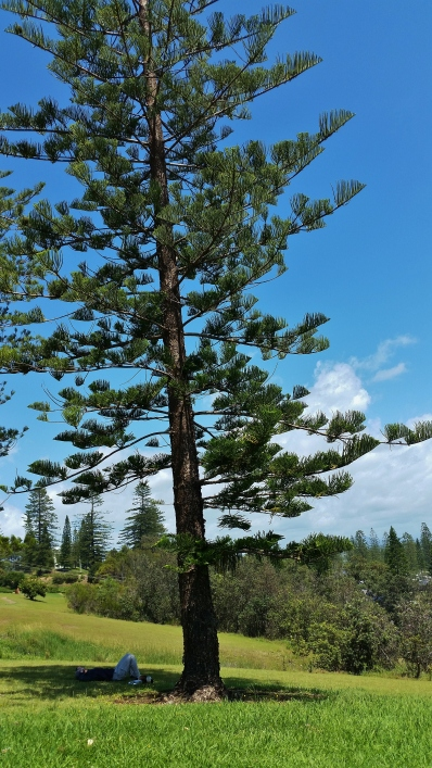 Port Macquarie Nature Photography coastal walk