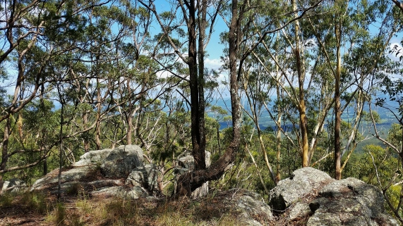 Port Macquarie Nature Photography Bago Bluff National Park