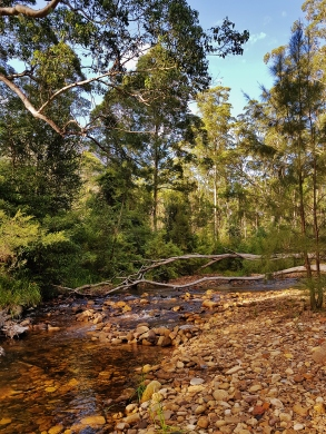 Perrys Lookdown Blue Mountains March 2018 (12)