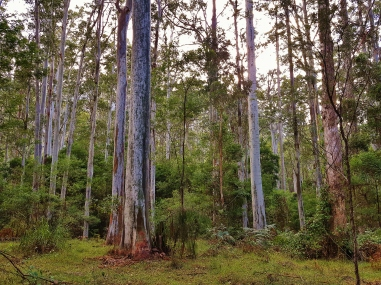 Perrys Lookdown Blue Mountains March 2018 (3)