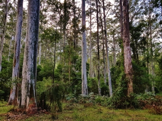 Perrys Lookdown Blue Mountains March 2018 (4)