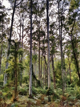 Perrys Lookdown Blue Mountains March 2018 (8)