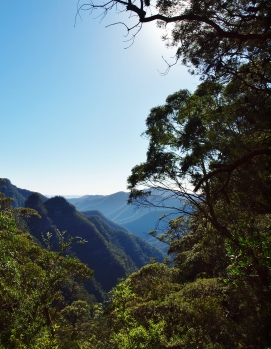 Kanangra Walls and Blue Mountains (183)