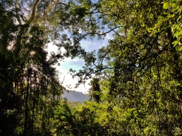 Mt Solitary Blue Mountains (10)
