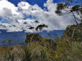 Mt Solitary Blue Mountains (41)