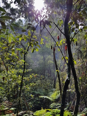 Mt Solitary Blue Mountains (6)