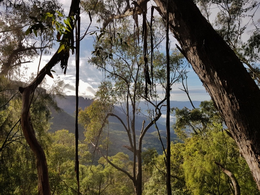 Mt Solitary Blue Mountains (8)