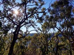 Cowan to Berowra Waters Freeman's Fitness hike (12)