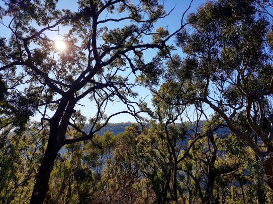 Cowan to Berowra Waters Freeman's Fitness hike (12)