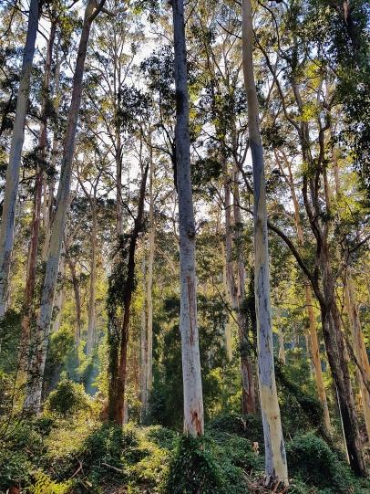 Perrys to Du Faur Head Hike (29)