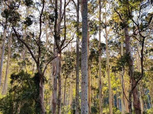 Perrys to Du Faur Head Hike (35)