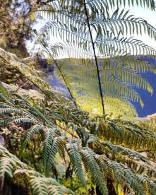 Katoomba Wentworth Falls171019_471