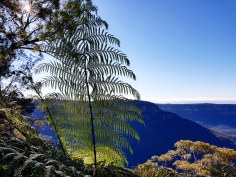 Katoomba Wentworth Falls171138_289