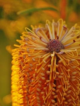 Orange Macro Photography