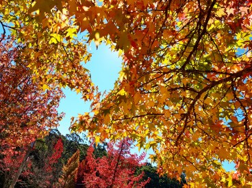 Autumn Mt Wilson 2019 (1)