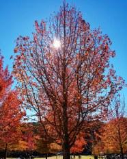 Autumn Mt Wilson 2019 (10)
