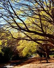 Autumn Mt Wilson 2019 (3)