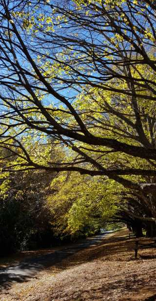 Autumn Mt Wilson 2019 (6)