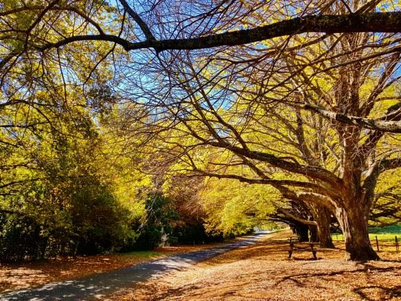 Autumn Mt Wilson 2019 (9)