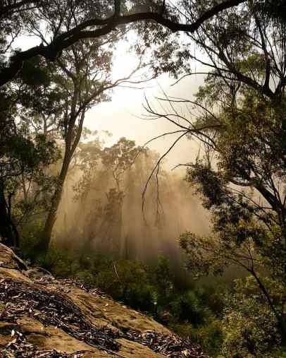 Blue Gum Trail Hornsby (1)