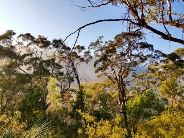Blue Gum Trail Hornsby (14)