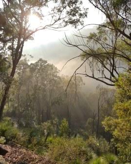 Blue Gum Trail Hornsby (15)